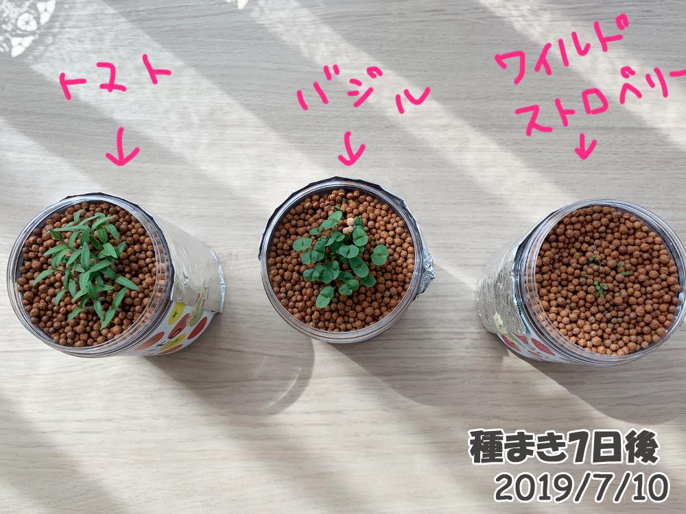 育てるグリーンペット7日目_双葉