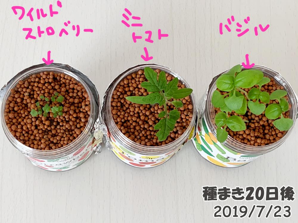 育てるグリーンペット20日目