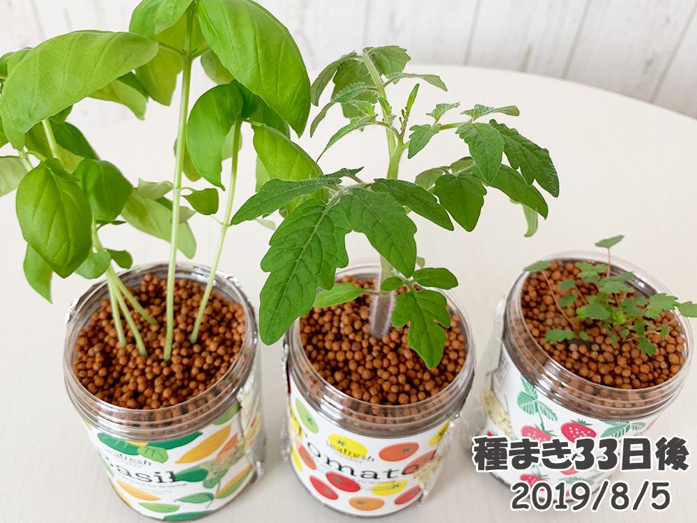 育てるグリーンペット33日目