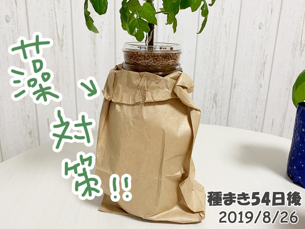育てるグリーンペット54日目_藻対策用の紙袋
