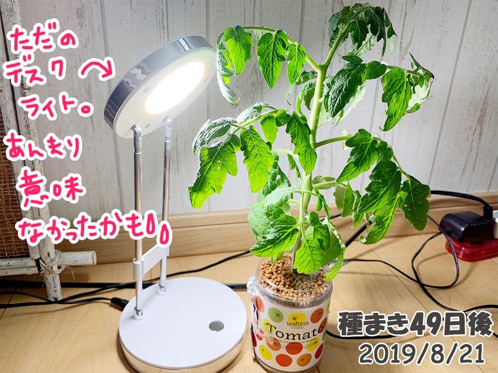 育てるグリーンペットミニトマトの栽培_夜は白色ライトをあててみる