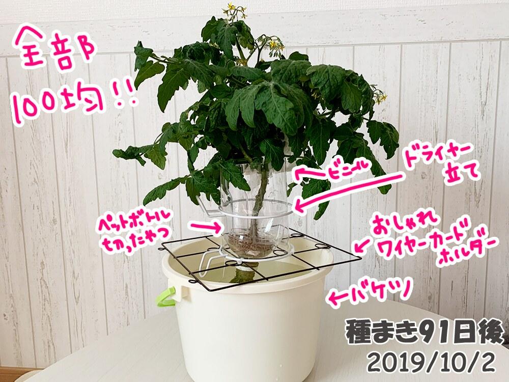 育てるグリーンペットミニトマトの栽培_ミニトマトの新容器自作!
