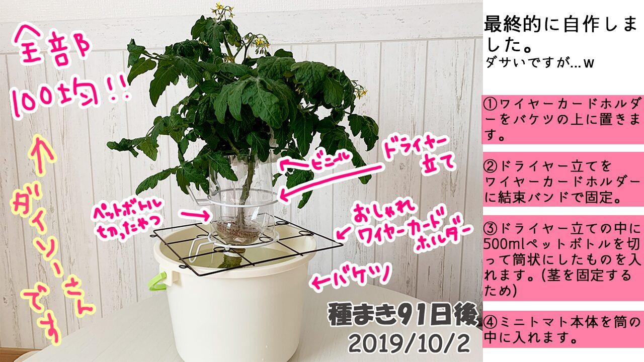 育てるグリーンペットミニトマトの栽培_自作の容器